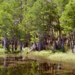 pine-log-pond.JPG