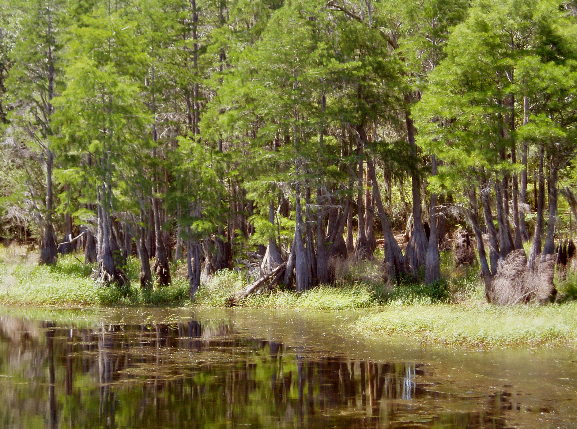 Trip Reports Apalachee Chapter Of The Florida Trail